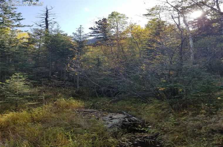Forest Road Manitou Springs Colorado 80829, ,Land,For Sale,Forest,6884305