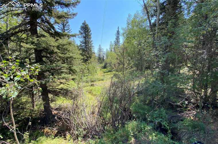 Looking down the spring fed creek into the meadow