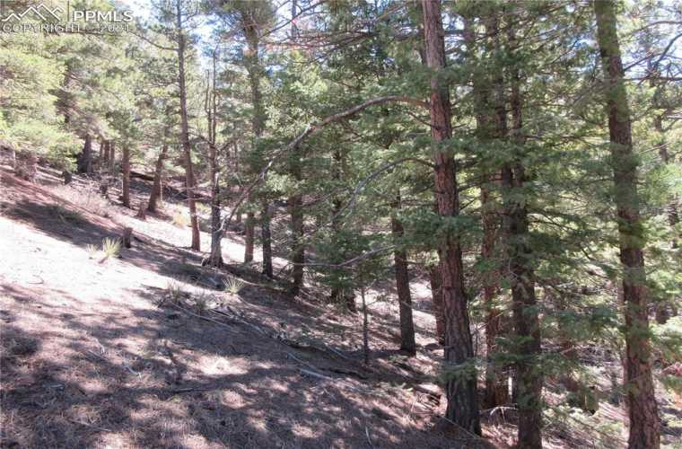 Healthy Ponderosa pines and Douglas Fir trees populate the entire property. This vacant land offers remote living with the modern convenience of high-speed internet and just minutes away from town.
