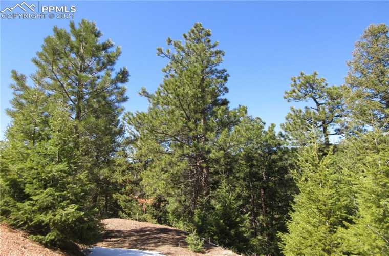 Looking to the west-southwest at Rocky Point Lane and driveway access point to lot.  Healthy and abundant Ponderosa pines and Douglas Fir trees populate the entire property.