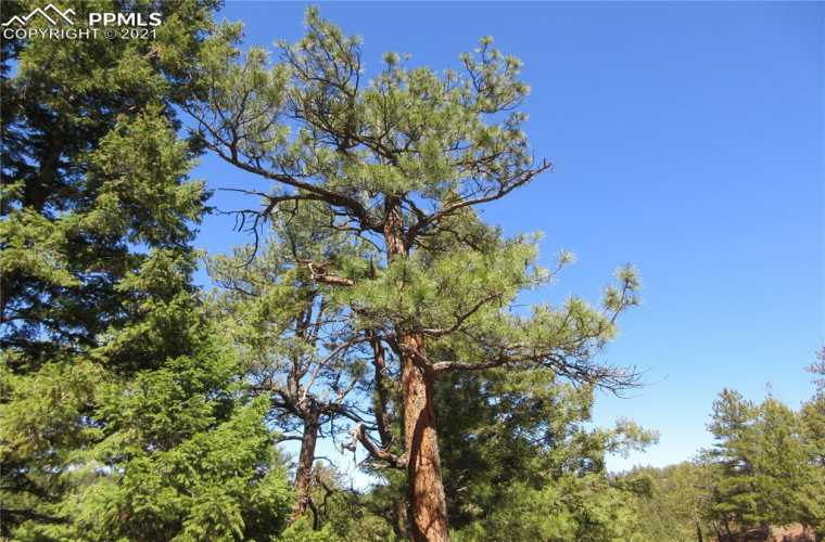 Mature Ponderosa pines and Douglas Fir trees populate the entire property.