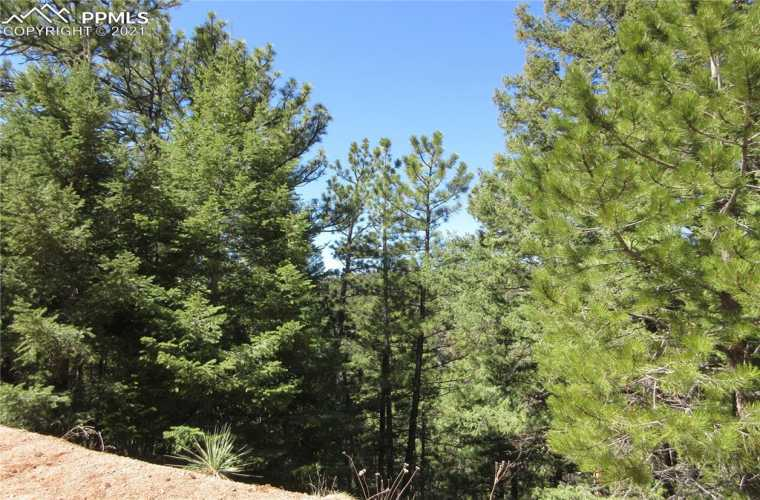 Healthy Ponderosa pines and Douglas Fir trees populate the entire property.